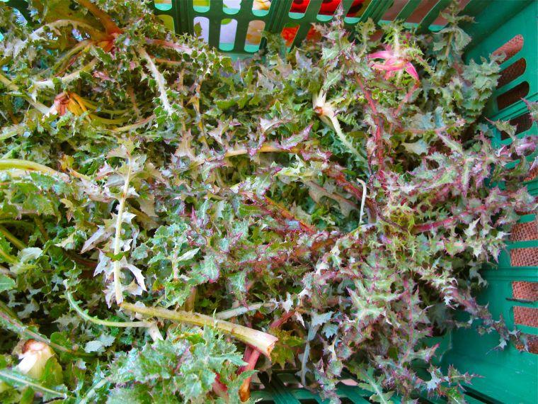Market Day Certaldo- Edible Weeds- Cicerbita